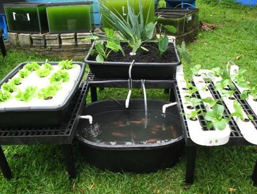 penerapan-hidroponik-sistem-aquaponik