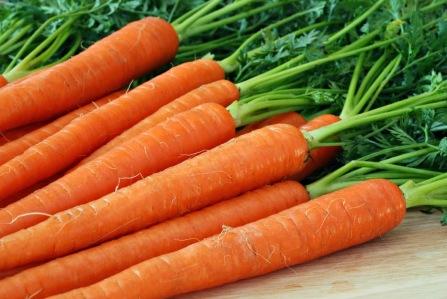 wpid-budidaya-wortel2