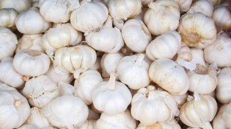White garlic on the market. Fresh garlic harvested from the garden for sale.