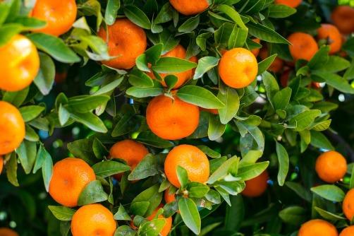 fruit-3175021_960_720
