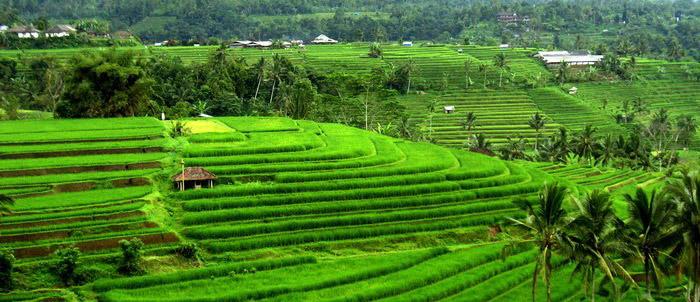Jenis Sistem Pertanian di Dunia